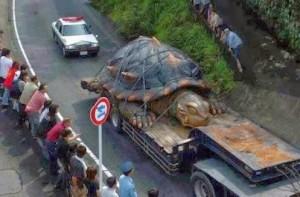 Hoax giant tortoise