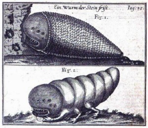 Stone worms, pix