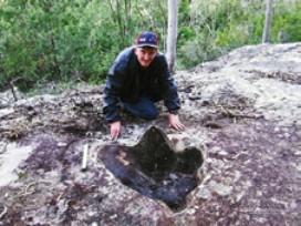 Fossilised Tyrannosaurid footprint