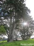 Mason Road Tree