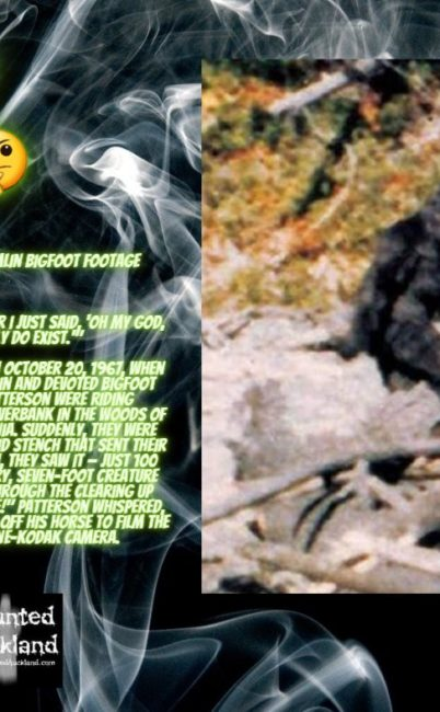 Tell us what you really think: The Patterson-Gimlin Bigfoot film