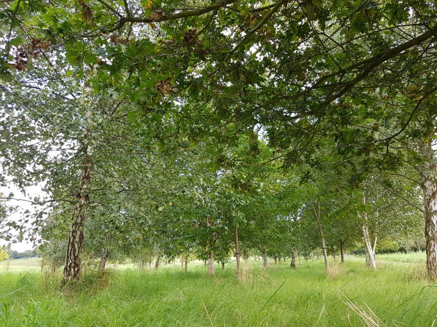 Tithe Green Burial Ground – Sherwood Forest