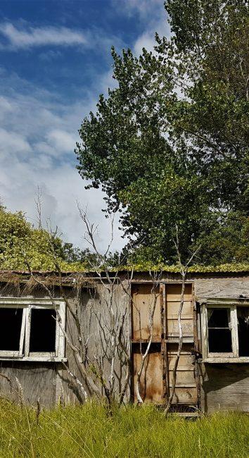 Rustic country living – Awhitu