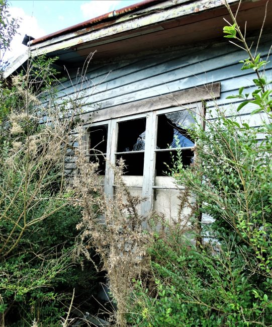 Hidden in Gorse – West Auckland