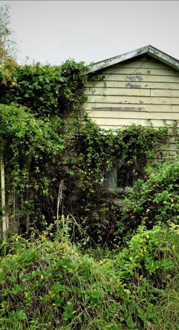 Classy car house – South East Auckland