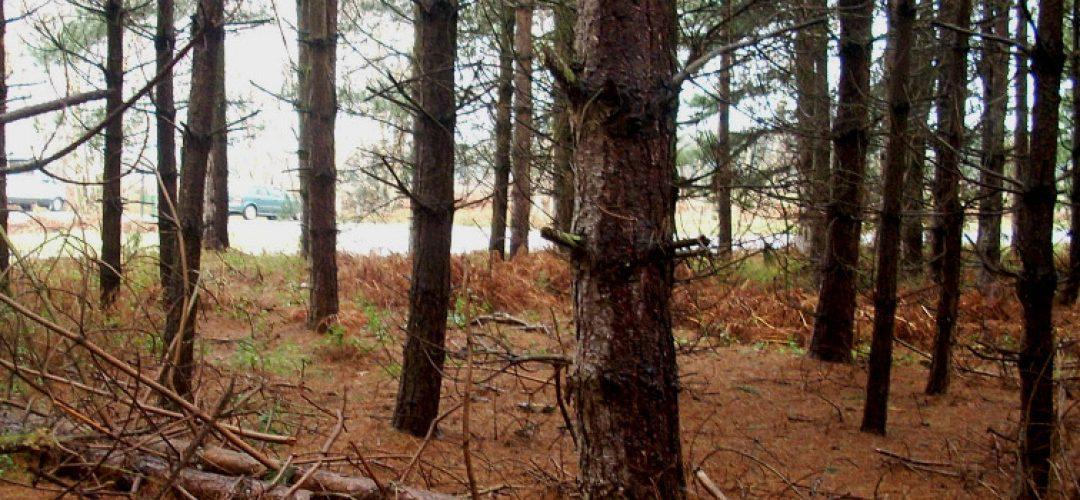 Rendlesham Forest Incident – Eyewitness Accounts