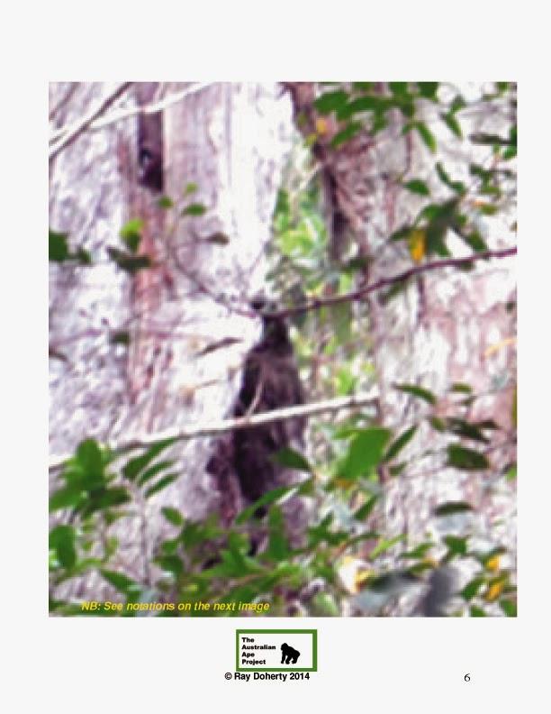 Tree Sitter Photo report & Investigation