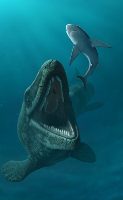 The Possiblity of Mosasaurs breeding off the New Zealand Coast.